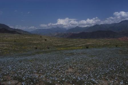Alay Mountains
