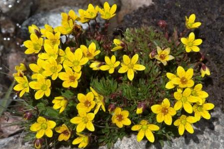Flora - Plant world