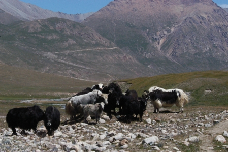 Tosor Ashuu Pass 3.893 m